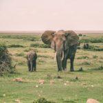 象の鼻はなんで長いのか